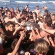 delfino2Delfino cucciolo muore per colpa turisti che vogliono selfie 2