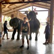 YOUTUBE Elefante massaggia turisti in Thailandia: nuova moda02
