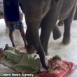 YOUTUBE Elefante massaggia turisti in Thailandia: nuova moda04