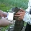 YOUTUBE Gatto torturato e ucciso: ragazzi lo fanno esplodere 2
