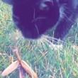 YOUTUBE Mantide religiosa mette in fuga il gatto3