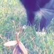 YOUTUBE Mantide religiosa mette in fuga il gatto4