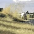 L'invasione dell'erba pelosa in Australia9