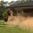 L'invasione dell'erba pelosa in Australia7
