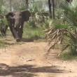 YOUTUBE Elefanti caricano senatore repubblicano Jeff Flake 4