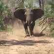 YOUTUBE Elefanti caricano senatore repubblicano Jeff Flake 5