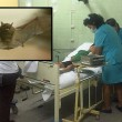 Pistrelli vampiri in Perù: 15 bimbi morsi, morti di rabbia