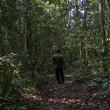 Zika: nella foresta in Uganda dove è nato il virus (FOTO)1