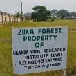 Zika: nella foresta in Uganda dove è nato il virus (FOTO)2