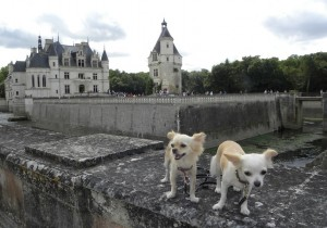 musei che accettano cani