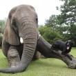 Bella e Bubbles, cane ed elefante amici per la pelle2