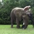 Bella e Bubbles, cane ed elefante amici per la pelle4