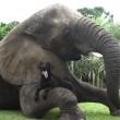 Bella e Bubbles, cane ed elefante amici per la pelle5