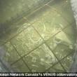 Carcassa in mare: in 4 giorni diventa scheletro2