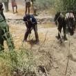 Elefante in pozza fango abitanti villaggio lo salvano 3