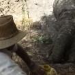 Elefante in pozza fango abitanti villaggio lo salvano 2
