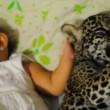 Neonata e cucciolo giaguaro bevono biberon insieme