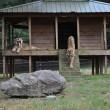 Orso, tigre e leone inseparabili: vivono insieme nel rifugio8