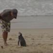 VIDEO YOUTUBE Pinguino torna ogni anno dal suo salvatore e.. 2