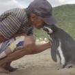VIDEO YOUTUBE Pinguino torna ogni anno dal suo salvatore e.. 4