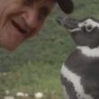 VIDEO YOUTUBE Pinguino torna ogni anno dal suo salvatore e.. 6