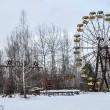 Chernobyl 30 anni dopo: mangiano cibo ancora contaminato05