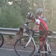 Koala assetato ferma ciclista e beve da sua borraccia FOTO02