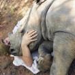 Baby rinoceronte dorme sulle gambe della veterinaria4