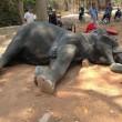 Elefante stremato muore per infarto con i turisti sopra