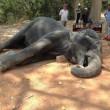 Elefante stremato muore per infarto con i turisti sopra3