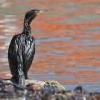 Petrolio genova: uccelli e pesci coperti greggio2