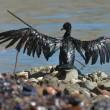 Petrolio genova: uccelli e pesci coperti greggio4
