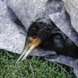 Petrolio genova: uccelli e pesci coperti greggio5