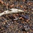 Petrolio genova: uccelli e pesci coperti greggio7
