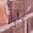 Super ape rimuove chiodo dalla parete