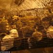 FOTO-VIDEO: Cina, cani e gatti cucinati al festival del cibo08