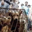 FOTO-VIDEO: Cina, cani e gatti cucinati al festival del cibo10
