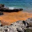 Gallipoli, mare diventa arancione per colpa delle alghe FOTO