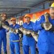 YouTube: pitone da record in Malesia, lungo oltre 7 metri4