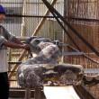 YouTube: pitone da record in Malesia, lungo oltre 7 metri5