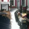 Ape regina nel bagagliaio: 20mila insetti su auto10