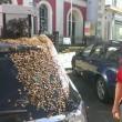 Ape regina nel bagagliaio: 20mila insetti su auto6