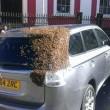 Ape regina nel bagagliaio: 20mila insetti su auto4