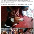 Beagle da laboratorio vedono prima volta la luce 7