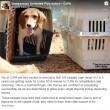 Beagle da laboratorio vedono prima volta la luce 5