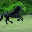 Frederick è il cavallo più bello del mondo6