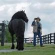 Frederick è il cavallo più bello del mondo5