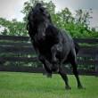Frederick è il cavallo più bello del mondo4