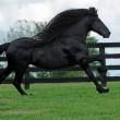 Frederick è il cavallo più bello del mondo11