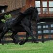 Frederick è il cavallo più bello del mondo9